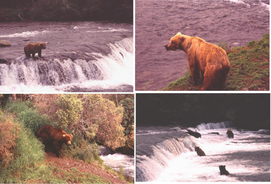Brooks Falls at Brooks Camp - Katmai National Park